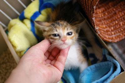 子猫と里子便り_a0064067_23245287.jpg