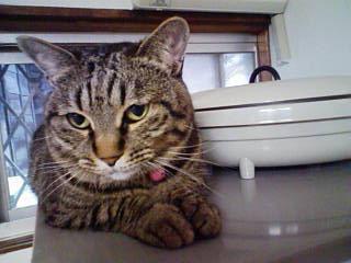子猫と里子便り_a0064067_23261459.jpg