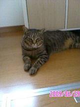 子猫と里子便り_a0064067_23264812.jpg