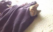 子猫と里子便り_a0064067_23281629.jpg
