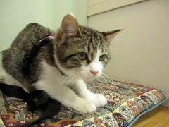 子猫と里子便り_a0064067_23322260.jpg