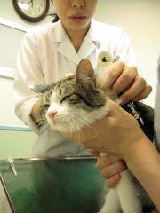 子猫と里子便り_a0064067_2332413.jpg