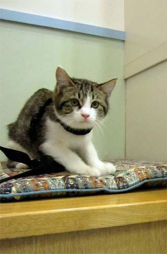 子猫と里子便り_a0064067_23333427.jpg
