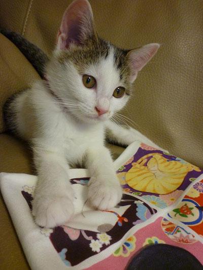 子猫と里子便り_a0064067_23354451.jpg