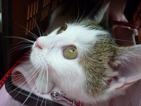 子猫と里子便り_a0064067_23361169.jpg