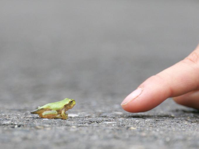 おたまじゃくし以上カエル未満です。_c0168669_143237.jpg