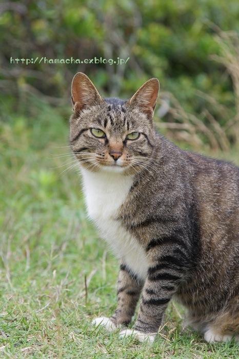 Cats in Shonan #33_c0158775_19392278.jpg