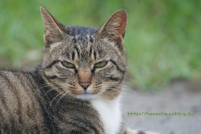 Cats in Shonan #33_c0158775_1939490.jpg