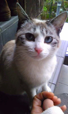 成猫♀不妊手術済み、里親さん募集中!!_c0167175_22384681.jpg