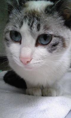 成猫♀不妊手術済み、里親さん募集中!!_c0167175_223878.jpg