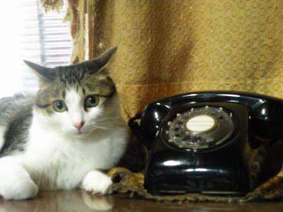 Cat and Phone_c0193077_20434713.jpg
