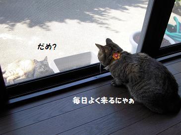 c0139488_1015319.jpg