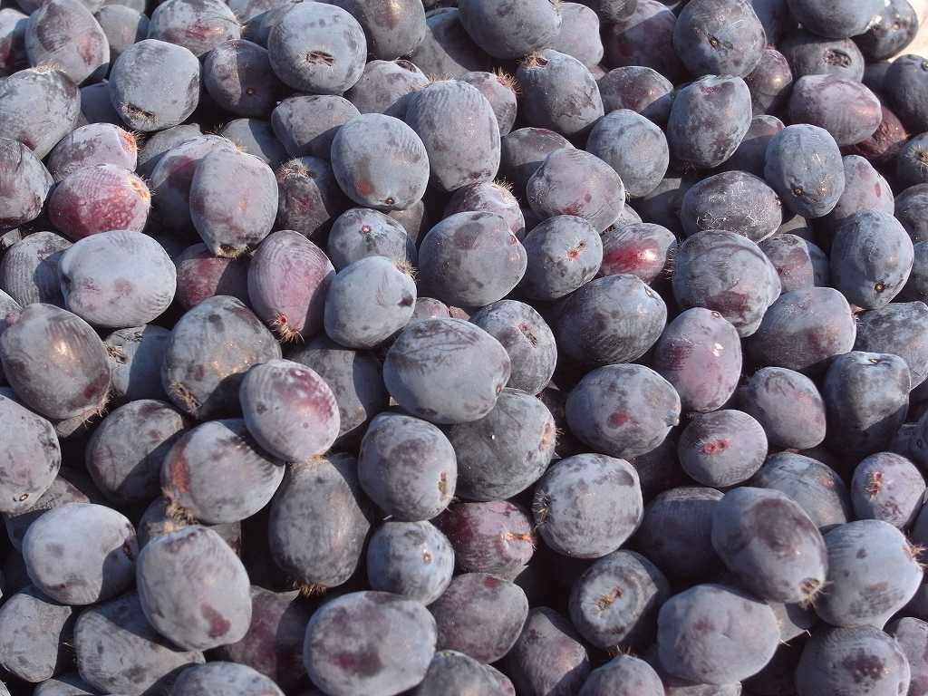 6月28日、ハスカップ果実の初収穫_f0138096_10425540.jpg