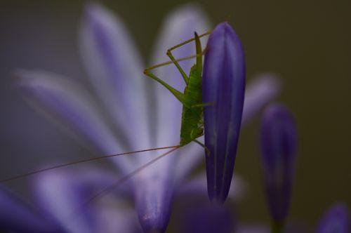 六月は昆虫もまだ子供です。_d0148902_20354418.jpg