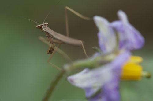六月は昆虫もまだ子供です。_d0148902_2035867.jpg