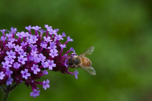 六月は昆虫もまだ子供です。_d0148902_20423562.jpg