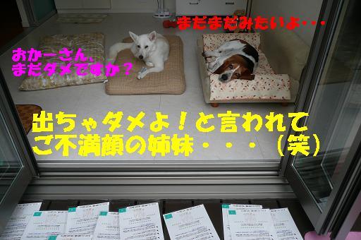 f0121712_1351860.jpg