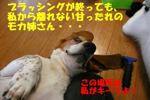 f0121712_1361349.jpg