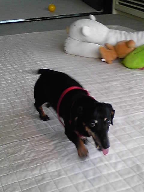 愛犬_b0141717_0194268.jpg