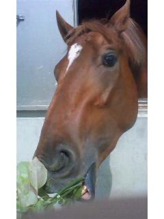 新馬の名前決定!!_f0161323_1723518.jpg
