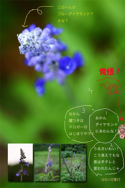 d0036450_7201084.jpg