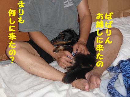 c0151866_22132732.jpg