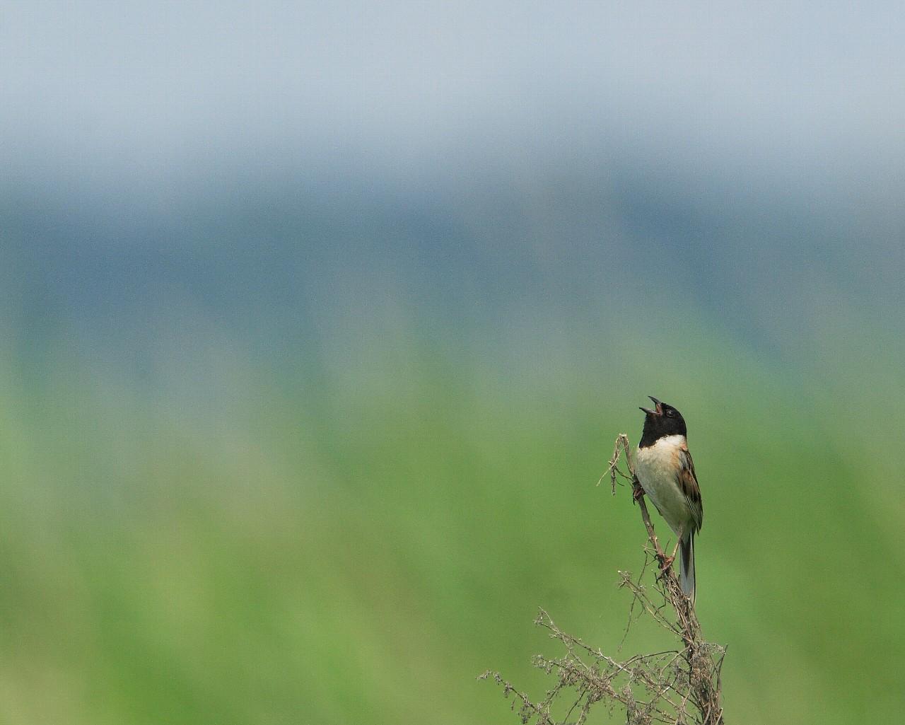 笹川は野鳥カメラマンに優しい土地です!_f0105570_21442997.jpg