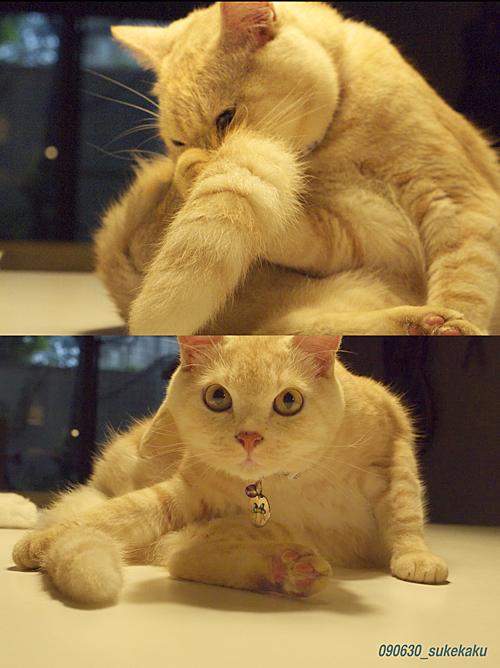 早朝の猫_a0002672_2051372.jpg