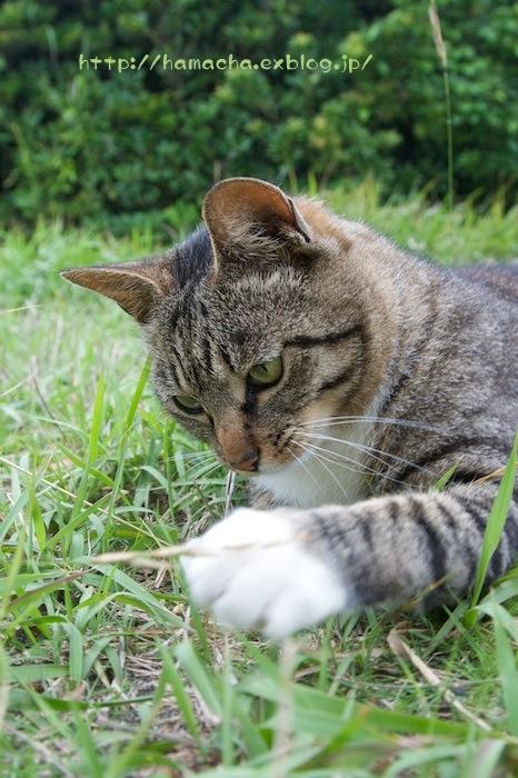 Cats in Shonan #34_c0158775_22232593.jpg