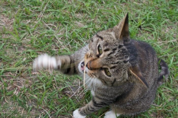 Cats in Shonan #34_c0158775_2223589.jpg