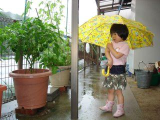 雨の日のマコちゃん_e0166301_15504021.jpg