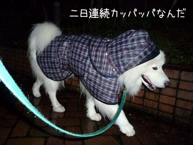 雨のモフモフ売り_c0062832_16421383.jpg