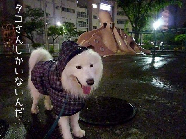 雨のモフモフ売り_c0062832_16422720.jpg