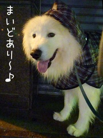 雨のモフモフ売り_c0062832_16424579.jpg