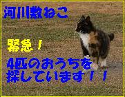 f0166234_2059127.jpg