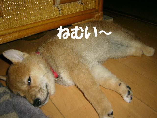 未来の憂鬱 _a0126743_424012.jpg