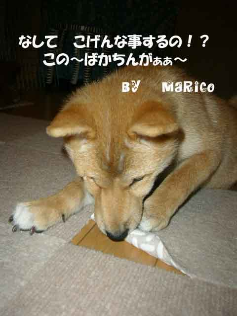 悪戯の天才 _a0126743_440218.jpg
