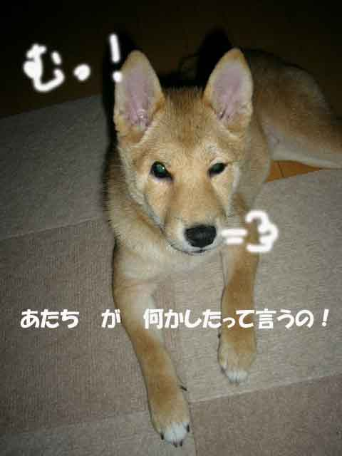 悪戯の天才 _a0126743_4403158.jpg