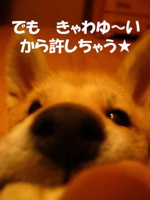 悪戯の天才 _a0126743_4404289.jpg