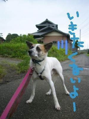 今日もお散歩 _a0126743_724194.jpg