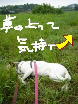 今日もお散歩 _a0126743_73425.jpg
