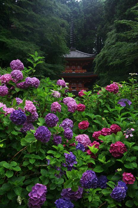 雨に煙る岩船寺(加茂・岩船寺)_f0155048_12233019.jpg