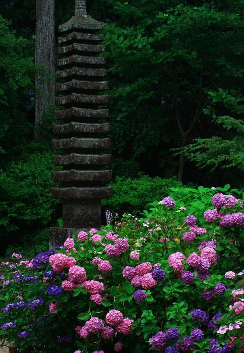 雨に煙る岩船寺(加茂・岩船寺)_f0155048_12242653.jpg