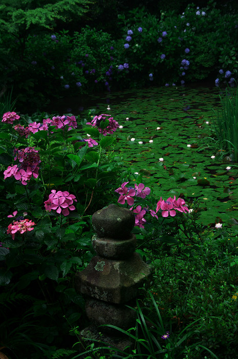 雨に煙る岩船寺(加茂・岩船寺)_f0155048_1224446.jpg