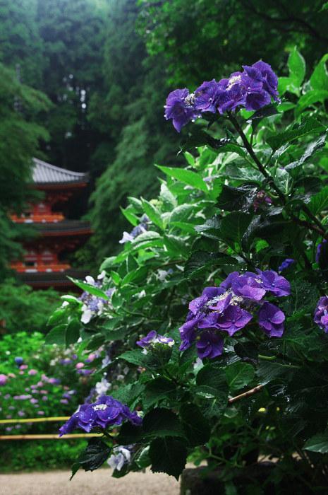 雨に煙る岩船寺(加茂・岩船寺)_f0155048_12262442.jpg