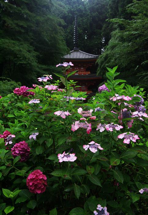 雨に煙る岩船寺(加茂・岩船寺)_f0155048_1226493.jpg