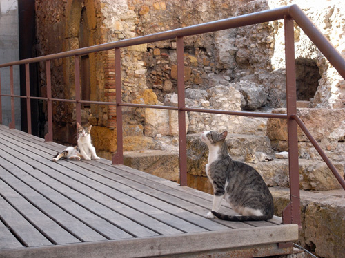 タラゴナの旧市街に棲む猫 スペイン_f0117059_22264513.jpg