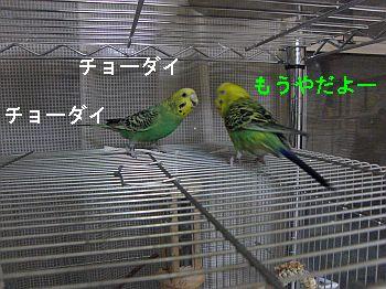 f0196665_124251.jpg