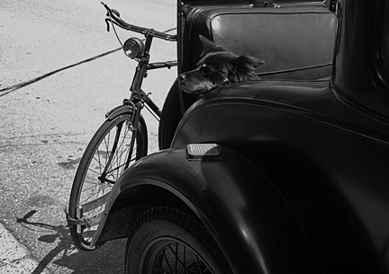 犬と車と自転車と、、、_f0077789_8221364.jpg