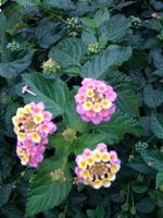 何の花??_f0061394_15475686.jpg